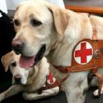 Grimoldi, manovra, emendamento Lega: Bonus mille euro per cani guida non vedenti Roma